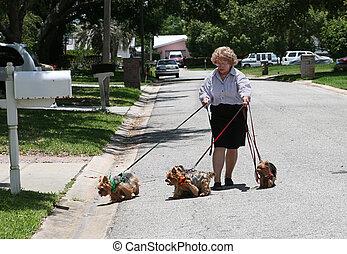 Walking Yorkies