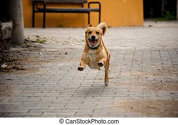 walkpath, asphalte, couleur, chien domestique, gingembre, courant