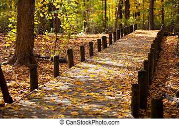 walkway and maple leaves