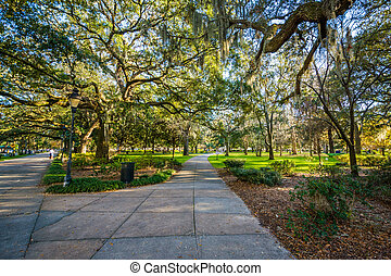 Walkway and trees with Spanish moss, at Forsyth Park, in Savannah, Georgia.