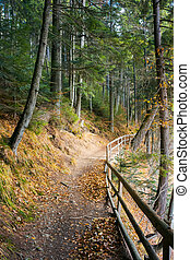 walkway around lake of Synevyr National park in autumn....