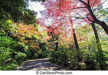 Walkway in japanese garden, Tokyo, Japan