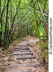 Walkway in rain forest