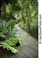 Walkway in rainforest. - Wooden walkway through lush plants...