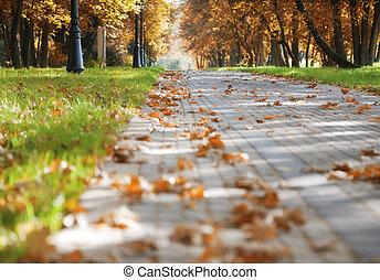 Walkway in the autumn park