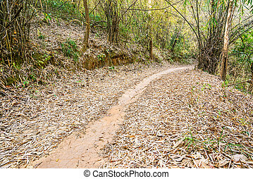 Walkway in the bamboo forest, Filled with fallen dry leaves on t