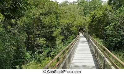 Walkway in the Iguazu National Park