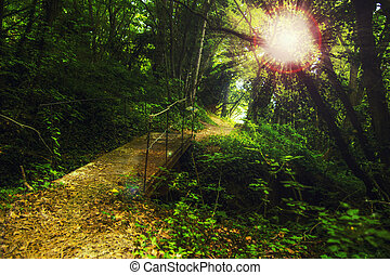 Walkway in the mountain forest