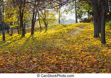 Walkway in the park is covered with fallen leaves