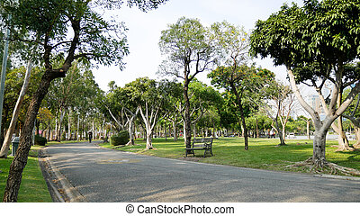 walkway in the park with trees forest