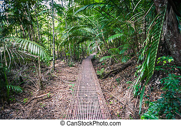Walkway into the forest