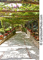 Walkway Under Grape Arbor - A walkway under an arbor in a...