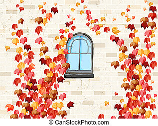 Wall and windows of house covered with red ivy in autumn