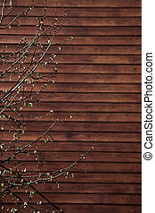 Wall background with a tree part - Wall with a part of a...