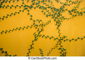 wall background with foliage