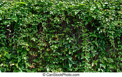 wall covered by green plant