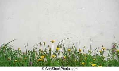 wall., fleurs, blanc, printemps, beau, été, vent, fond, ou
