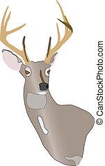 buck deer - wall hanger buck deer on white