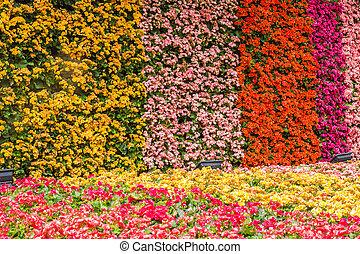 wall of flower in garden