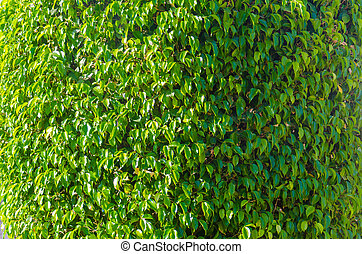 Wall of plants in the garden