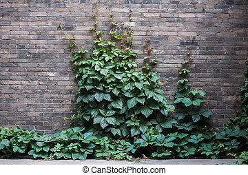 Wall with a green leaves