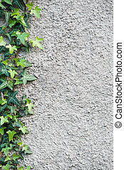 Wall with an ivy. Background.