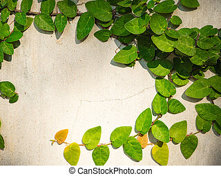 Wall with leaf background