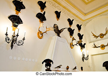 Wall with natural hunting trophies, stuffed animals and birds, horns of moose and deer. The background