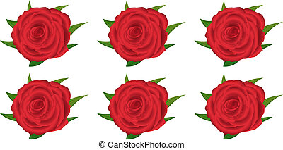 wallpaper pattern with of red roses