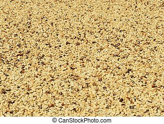 closeup of dried coffee beans in Hawaii