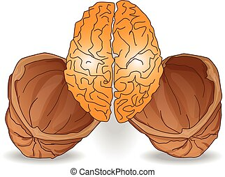 walnut brain illustration isolated