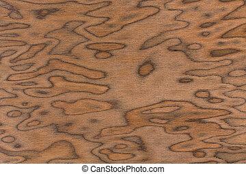 Walnut burl wood grain texture background.