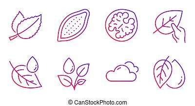 Walnut, Cloudy weather and Mint leaves icons set. Plants...