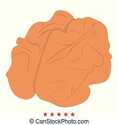 Walnut icon Illustration color fill style