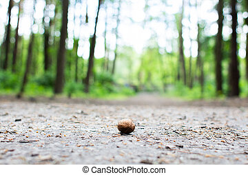 walnut lies on the ground in the forest