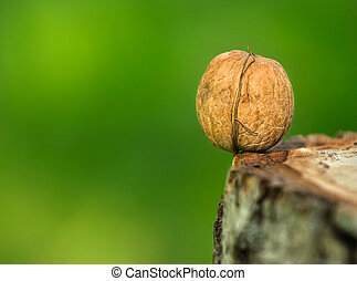 walnut on the edge of log close up