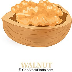 walnut on white background for your design