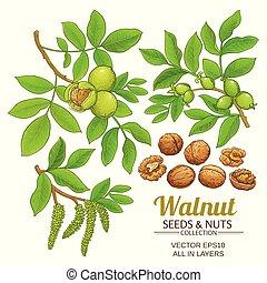 walnut plant vector set on white background