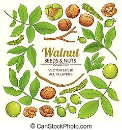 walnut plant vector - walnut plant elements vector on white...
