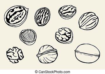 Walnut set, hand drawn