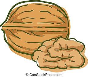 Walnut Superfood Illustration - Illustration of Walnut, a ...