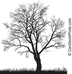 Walnut tree in winter - Vector illustration of walnut tree ...