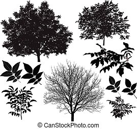 Walnut tree silhouette - Collection of silhouettes of walnut...