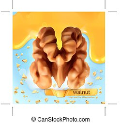 Walnut vector background