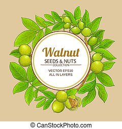 walnut vector frame on color background