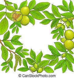 walnut vector frame on white background