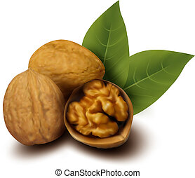 Walnuts and a cracked walnut Vector illustration