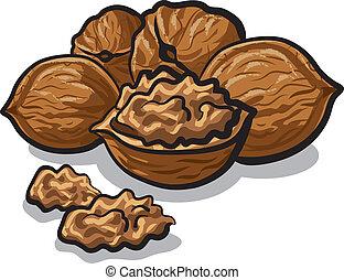 walnuts - group of walnuts