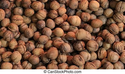 Big pile of walnuts being collected