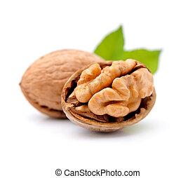 Walnuts on white background.